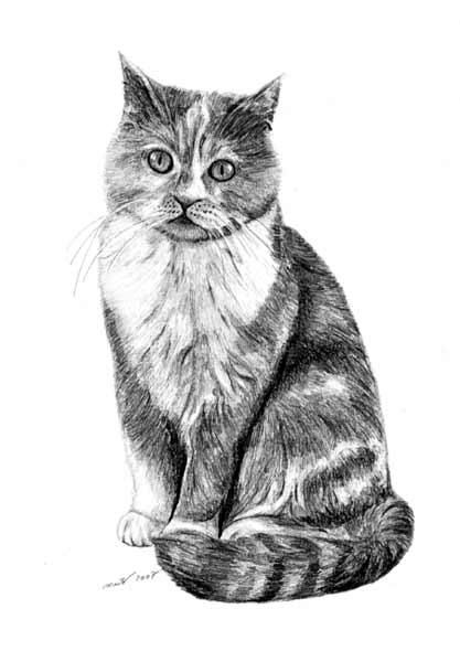 Kresby Zvirat Obrazky Zvirat Domaci Mazlicci Kresba Kone